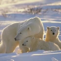 Mães Animais